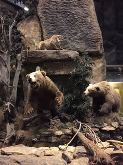 Bass Shop Bears